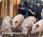 Police-Raid-Farm-Pigs