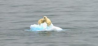 Polar-bear-iceberg