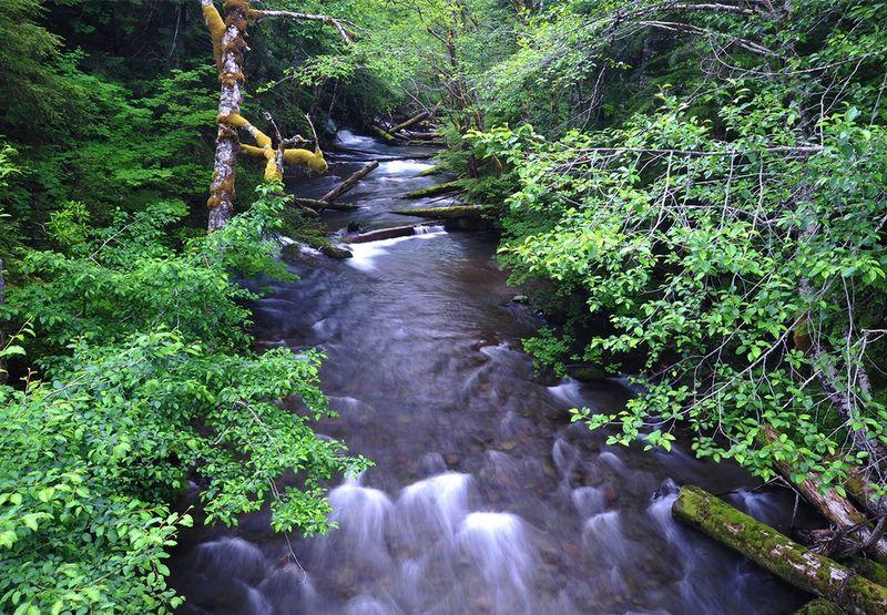 Rg2_West-Fork-near-Ladd-Creek-(2).jpg